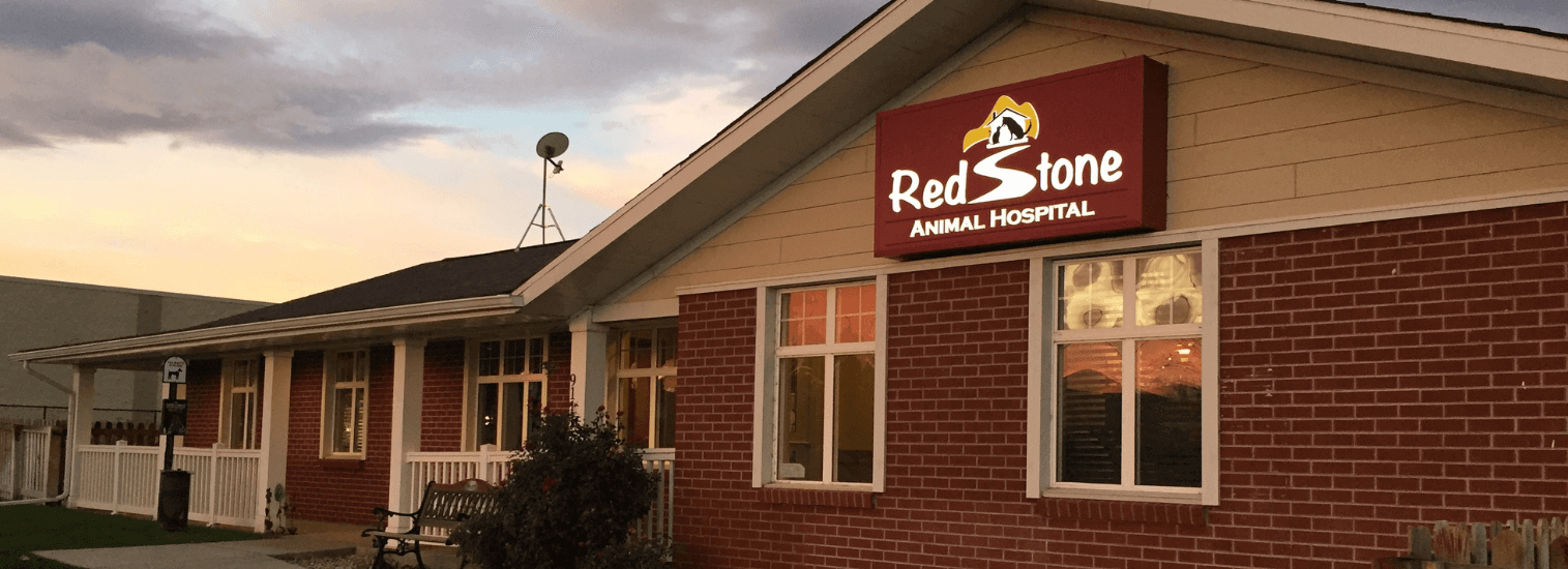 Top Rated Local Veterinarians – Redstone Animal Hospital